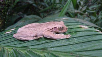 Night time safari in Costa Rica