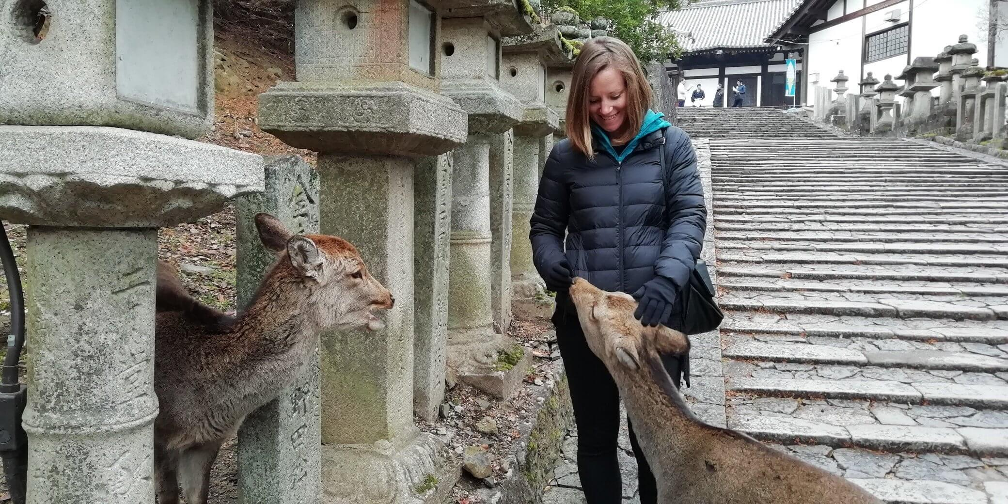 The Top 5 Animal Experiences In Japan