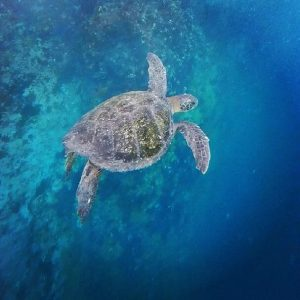 Marine Conservation Volunteer Opportunities