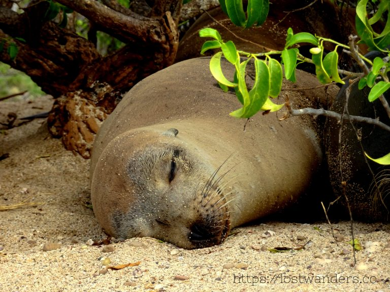 The greatest animals of the Galapagos Islands