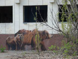 Brown Bear Graffiti Chernobyl