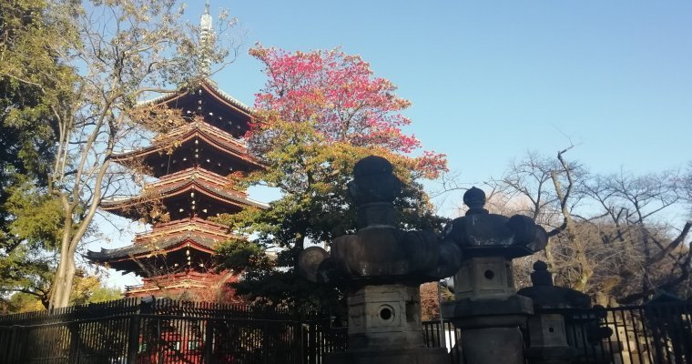 10 tips for travelling in Japan on a budget