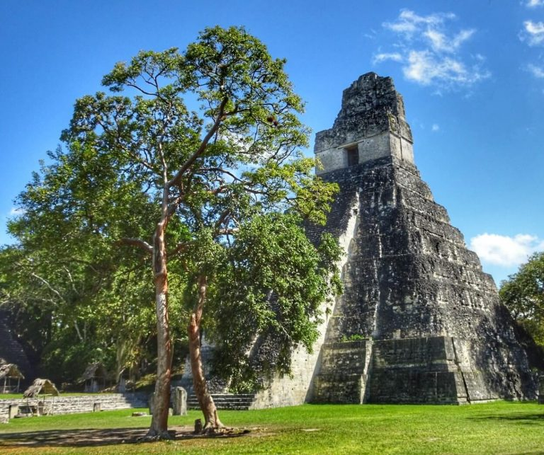 Read more about the article Tikal – A nature lovers guide