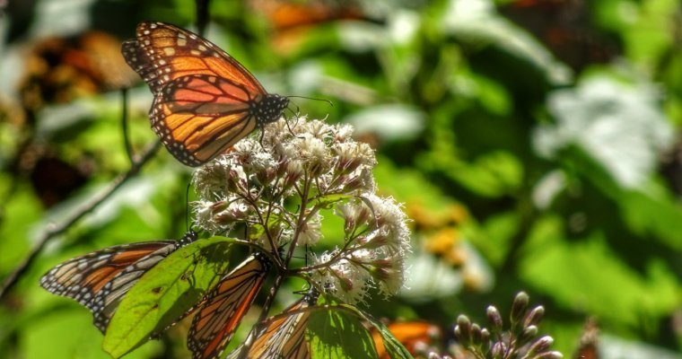 How to do a day trip to the Monarch butterfly reserves from Mexico City
