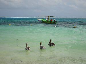 Visit Puerto Morelos