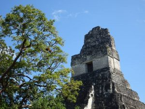 Tikal Mayan Jungle Ruins Temple
