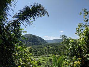 Hummingbird Highway Belize Jungle