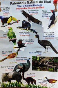 Tikal animal species