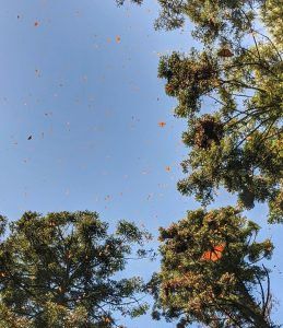 How to do a Day Trip from Mexico City to the Monarch Butterfly Reserves in Angangueo