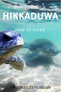 See Green Turtles in Hikkaduwa