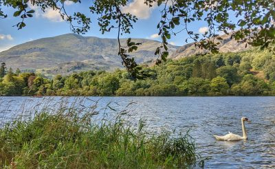 Where to see wildlife in the Lake District