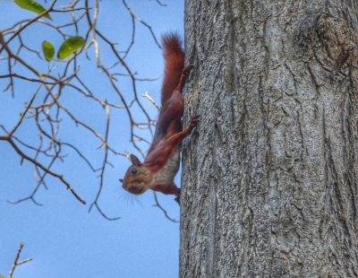 Where to see red squirrels in the Lake District England